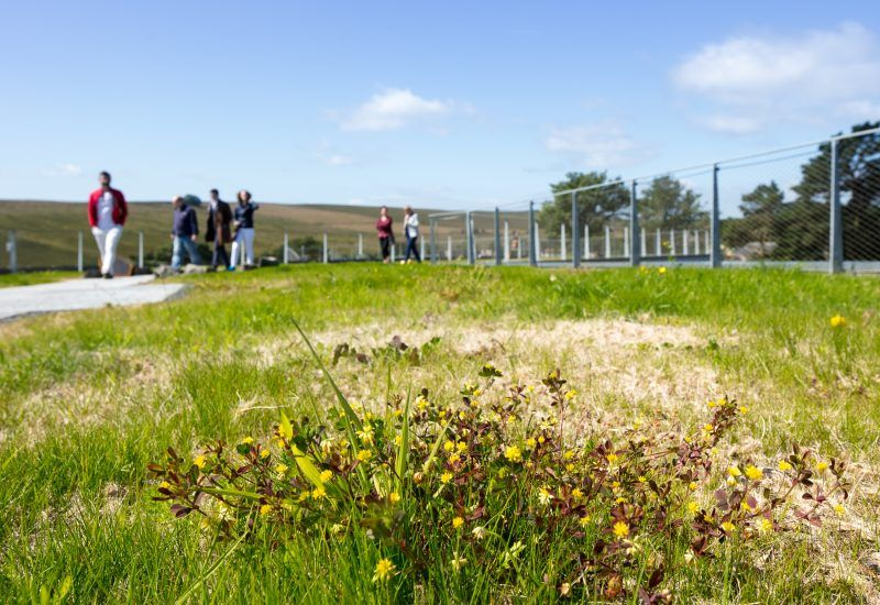 visitor looks at the green roof of The Sill