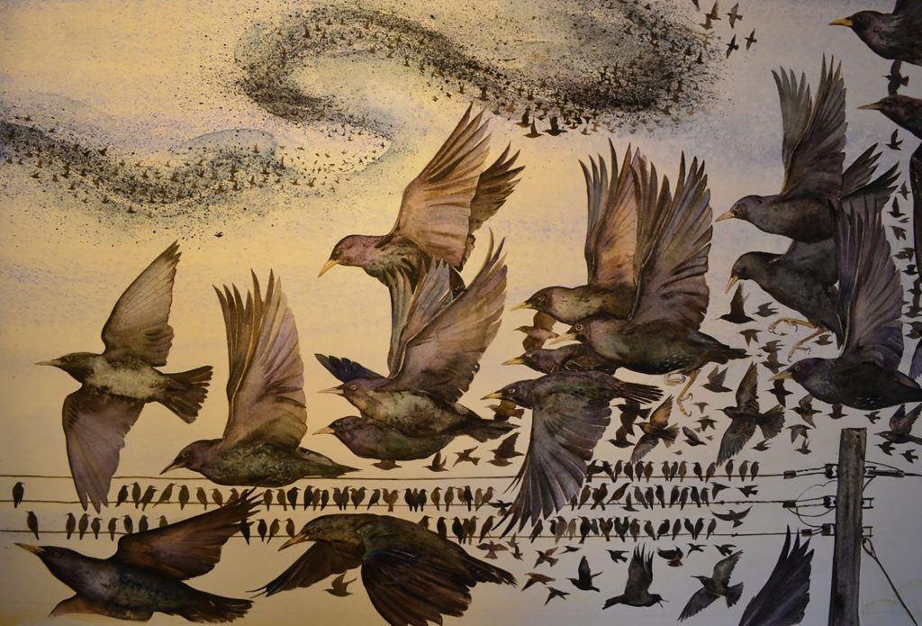 Illustration Starlings iii ©Jackie Morris