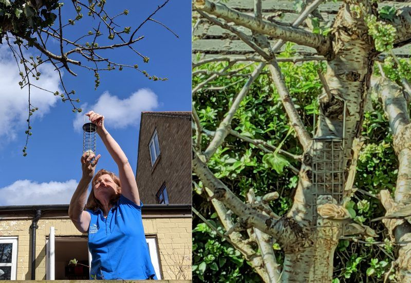 A woman hanging a bird feeder in a tree and a close up on bird feeding