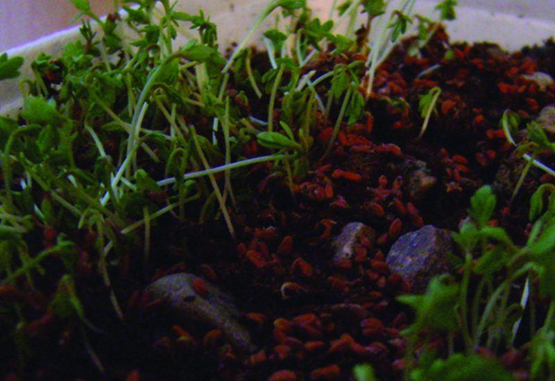 A home grown cropmark