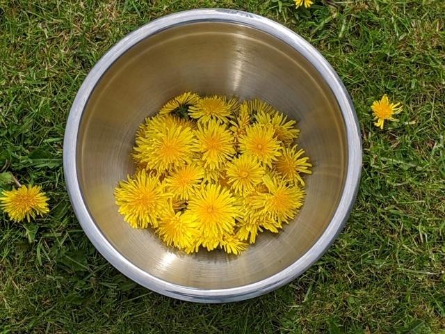 A steel pan full of dandelion flowers