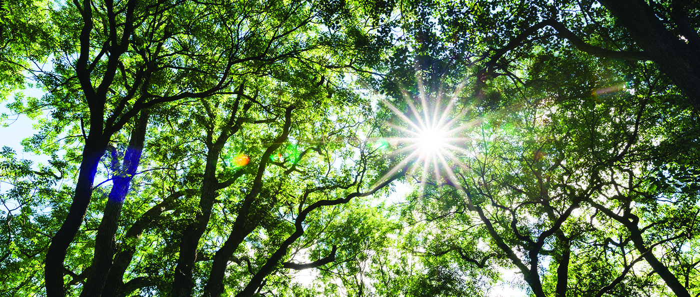 Sunlight shining through a canopy of trees