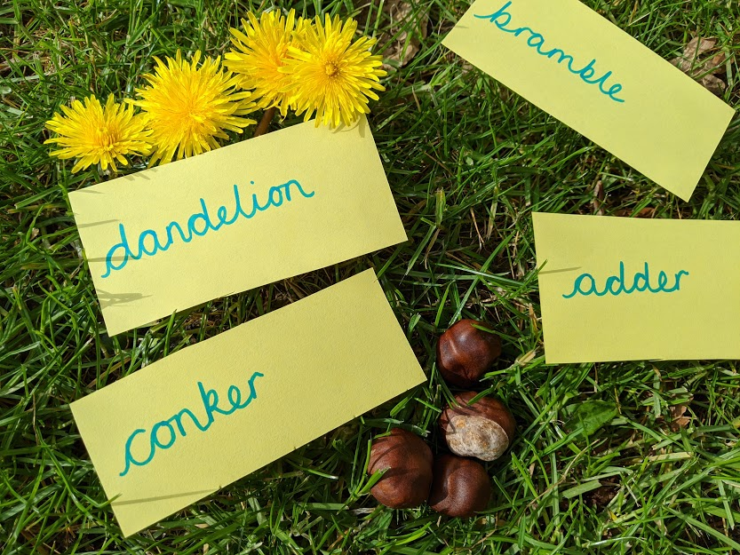 The words bramble, dandelion, conker and adder on yellow pieces of paper