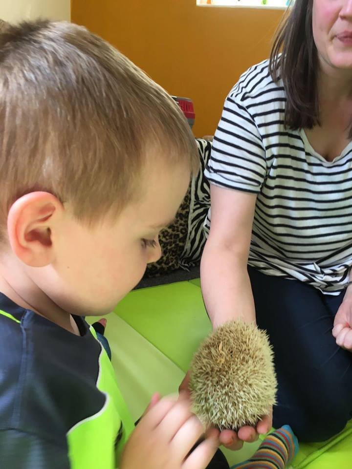 A small child being shown a hedgehog