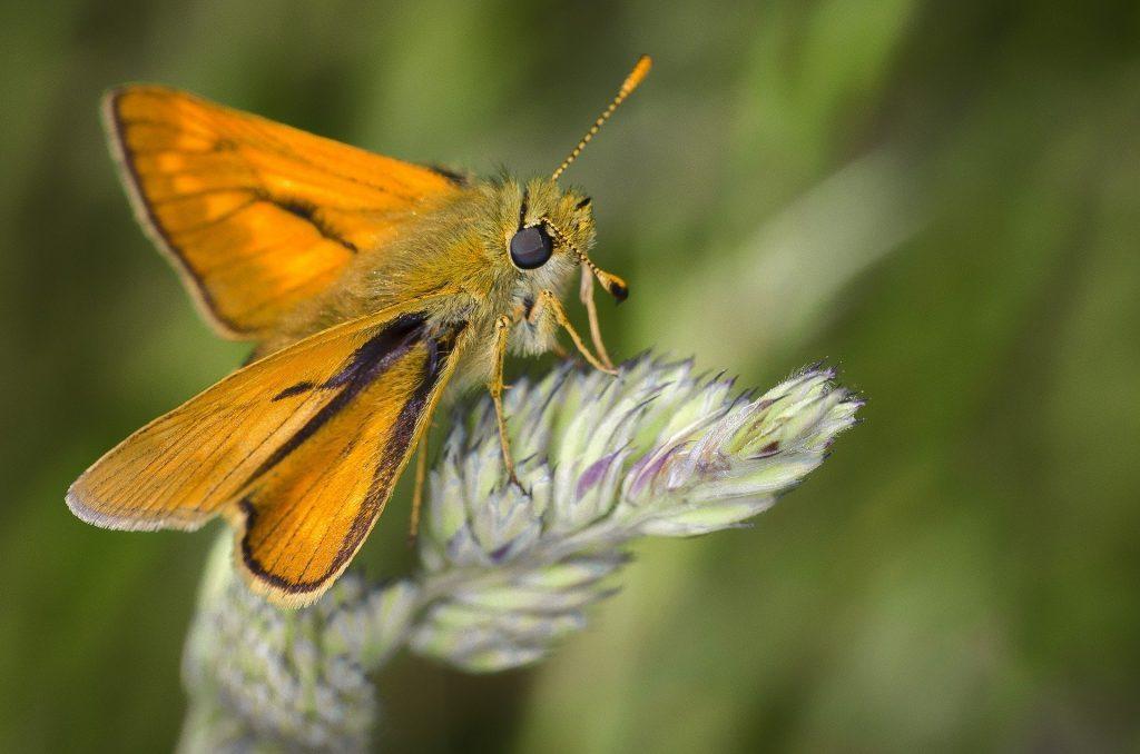 A colourful moth on a leaf