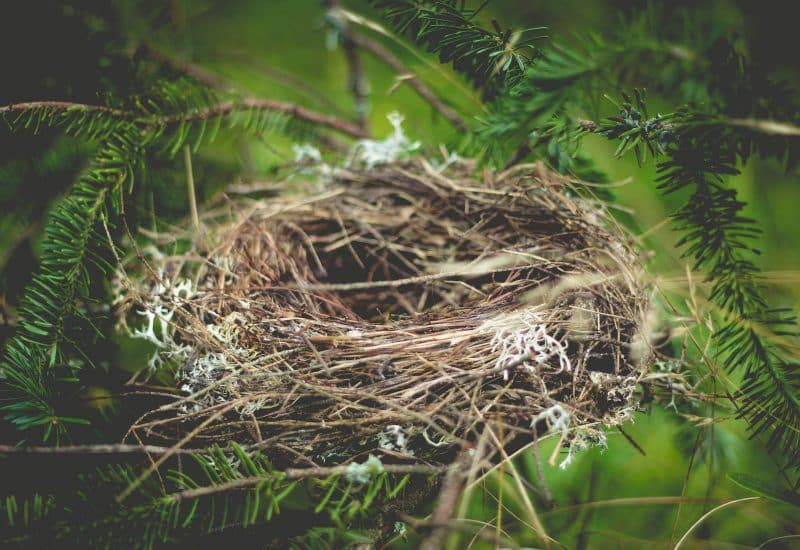 An empty birds nest in tree branches