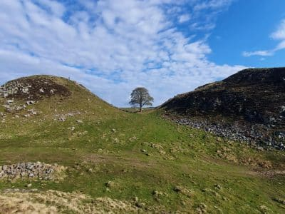 A photograph of Sycamore Gap on Hadrian's Wall. A walker stands looking down to the tree below under cloud filled blue skies.