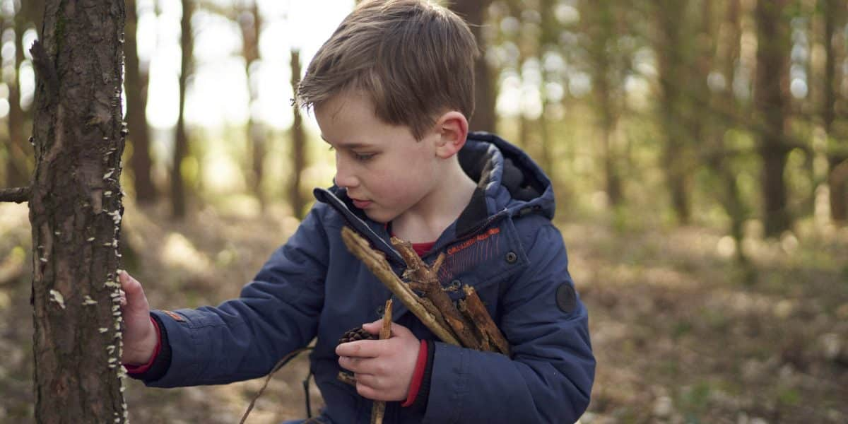 A young boy, wearing a blue jacket, collects sticks in a wood